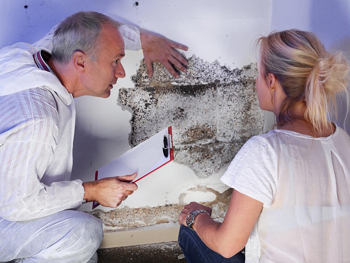 Cellar Door Home Inspection Mold November
