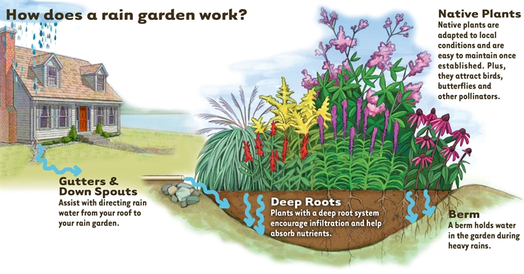How To Build A Rain Garden To Filter Run – Off (and Keep Your Foundation Dry!)